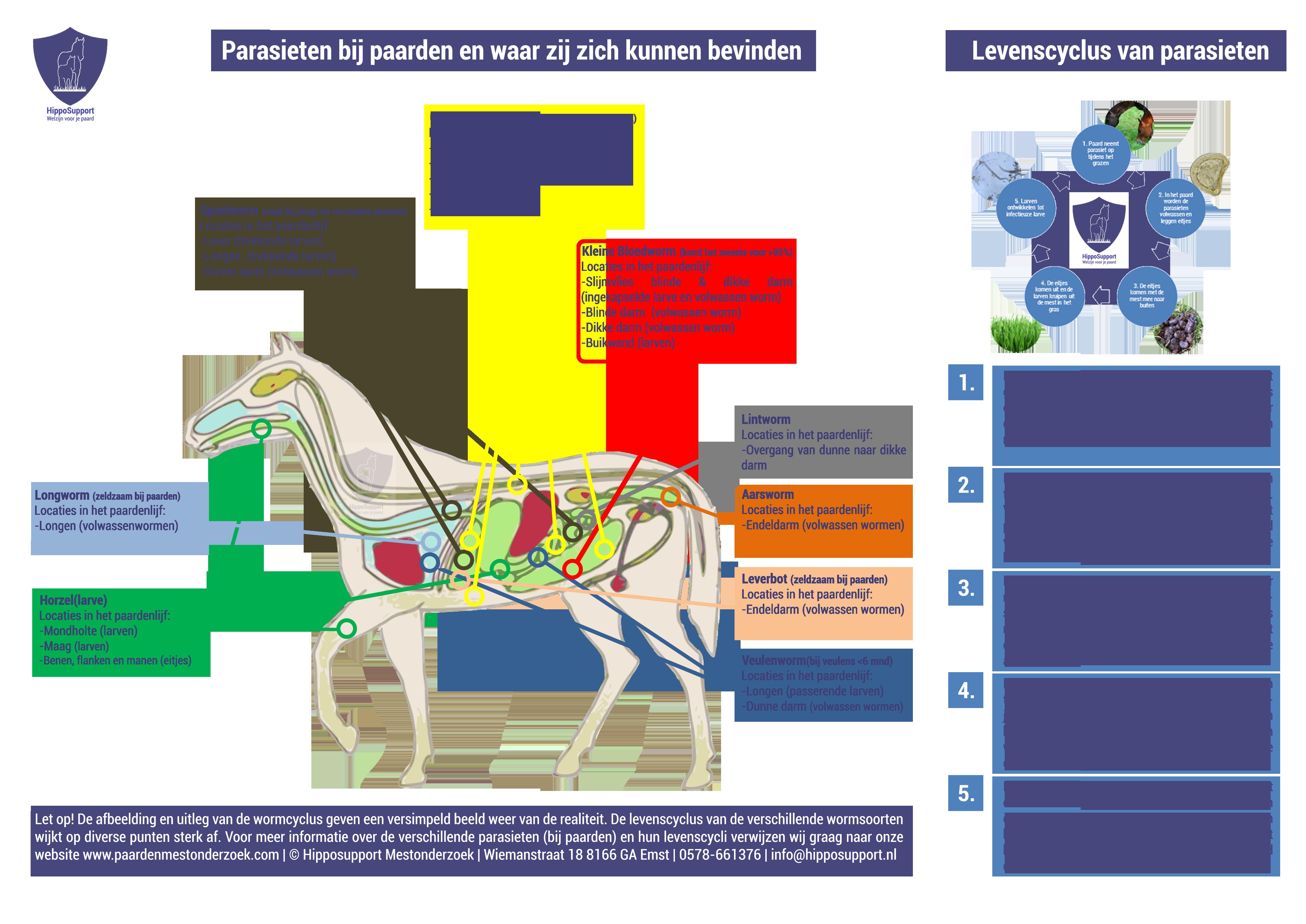 Lees meer over het artikel Wie, wat, waar en waarom van parasieten bij paarden met Joanne Neidhöfer