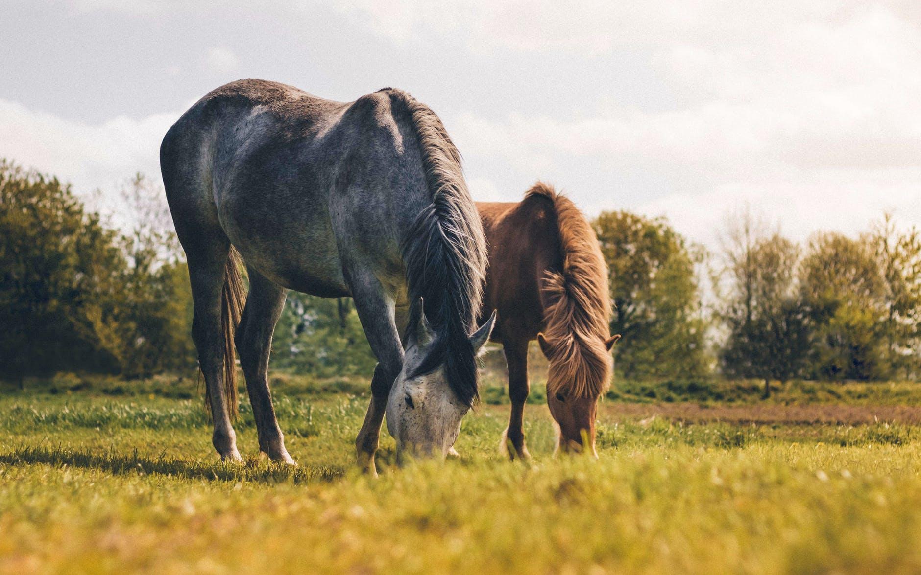 Lees meer over het artikel Gaat je paard naar een nieuwe stal? Denk hier dan aan!